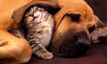 Léčba zvířat